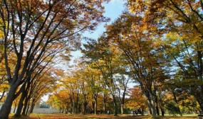 紅葉は良い感じで、青空とのコントラストが綺麗でした。
