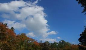 午前中は曇っていましたが、午後になって青空が広がってきました。